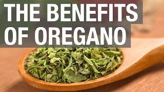 The Benefits of Oregano