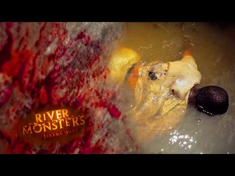 Demon Fish Story - River Monsters