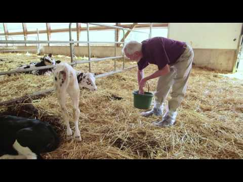 Animal Welfare Commitment