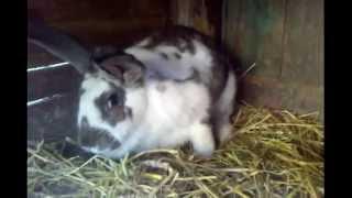 Уникальное видео в мире животных!(Unique video of animals in the world!)