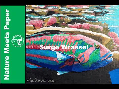 Surge Wrasse  - 4:8 - Nature  Meets Paper