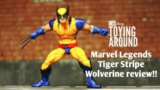 Marvel Legends Wolverine TIGERSTRIPE review (Apocalypse BAF wave 2018)