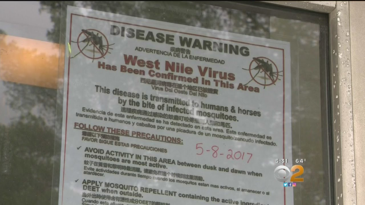 Mosquitoes In San Gabriel Valley Test Positive For West Nile Virus