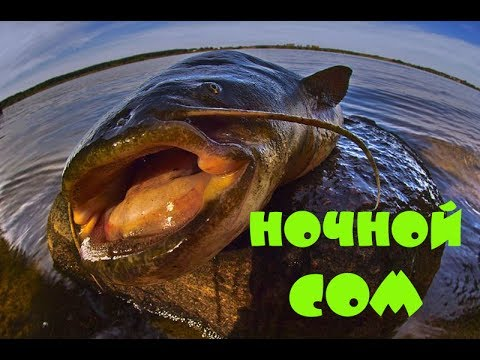 бесплатное видео про рыбалку на сома
