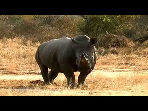 African Wildlife - Discovery Channel