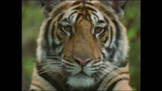 Anthony Marr: Champion of Bengal Tiger - part 1 of 2