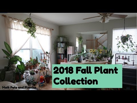 2018 FALL PLANT COLLECTION