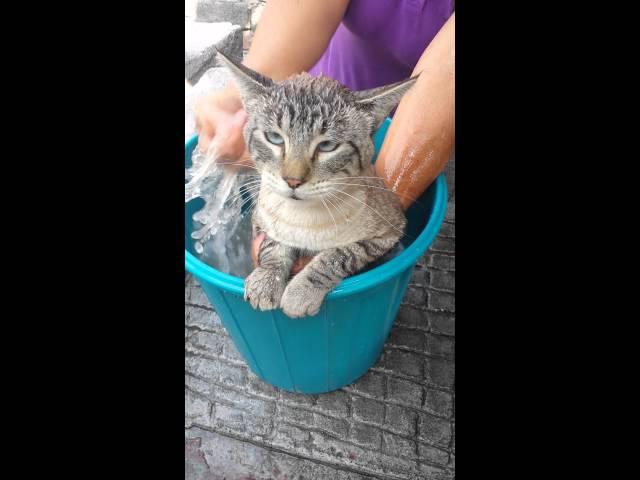 Este gato necesita que lo salven del baño... y pide ayuda a Raúl