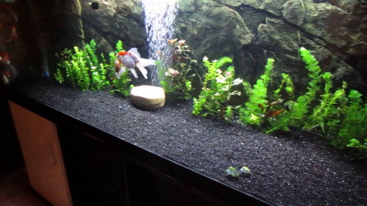 aquarium avond licht youtube. Black Bedroom Furniture Sets. Home Design Ideas