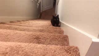 playing with jiji the cat