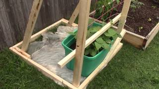 New Pole Bean Trellice - Raised Bed Garden Update 8