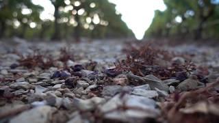 Château de Berne: os vinhos rosés da Provença