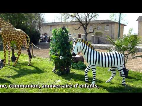 Location d'animaux de la savane pour décoration jungle et safari..