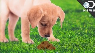 Why Do Animals Eat Their Own Poop?