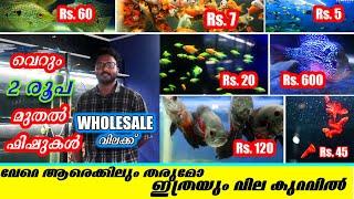 AJ Aqua Garage | Aquarium and Ornamental Fishes-Aquarium Accessories-Wholesale Fishes