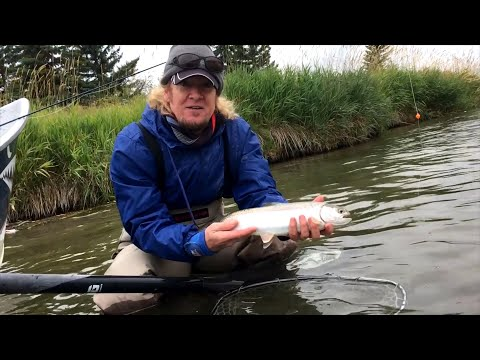 Trout Fishing In The River Bow, Alberta, Canada
