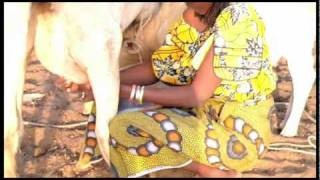 Africa Solar Food - Élevage - Fabrication du Fromage.mov