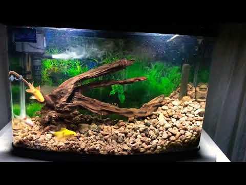 Crystal clean aquarium wood decoration