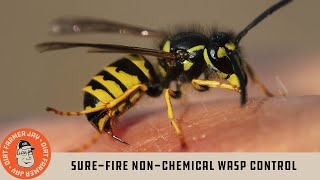Sure-Fire Non-Chemical Wasp Control