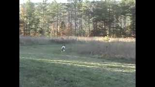 Hunting Trip 01 - German Shorthair Pointers