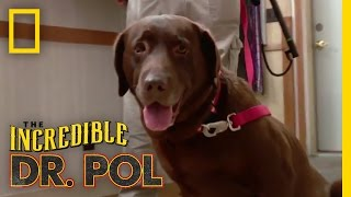 All I Want for Christmas Are Pups! | The Incredible Dr. Pol