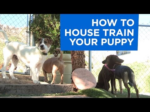 how-to-potty-train-your-puppy