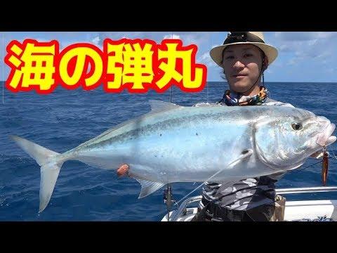 オーストラリアの海!海の帝王が姿を現す!#7