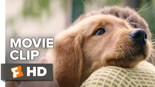 A Dog's Purpose Movie CLIP - Bailey Learns His Place (2017) - Josh Gad Movie