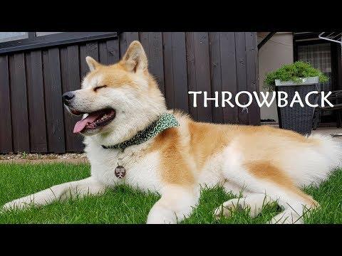 Akita Inu - Throwback ()