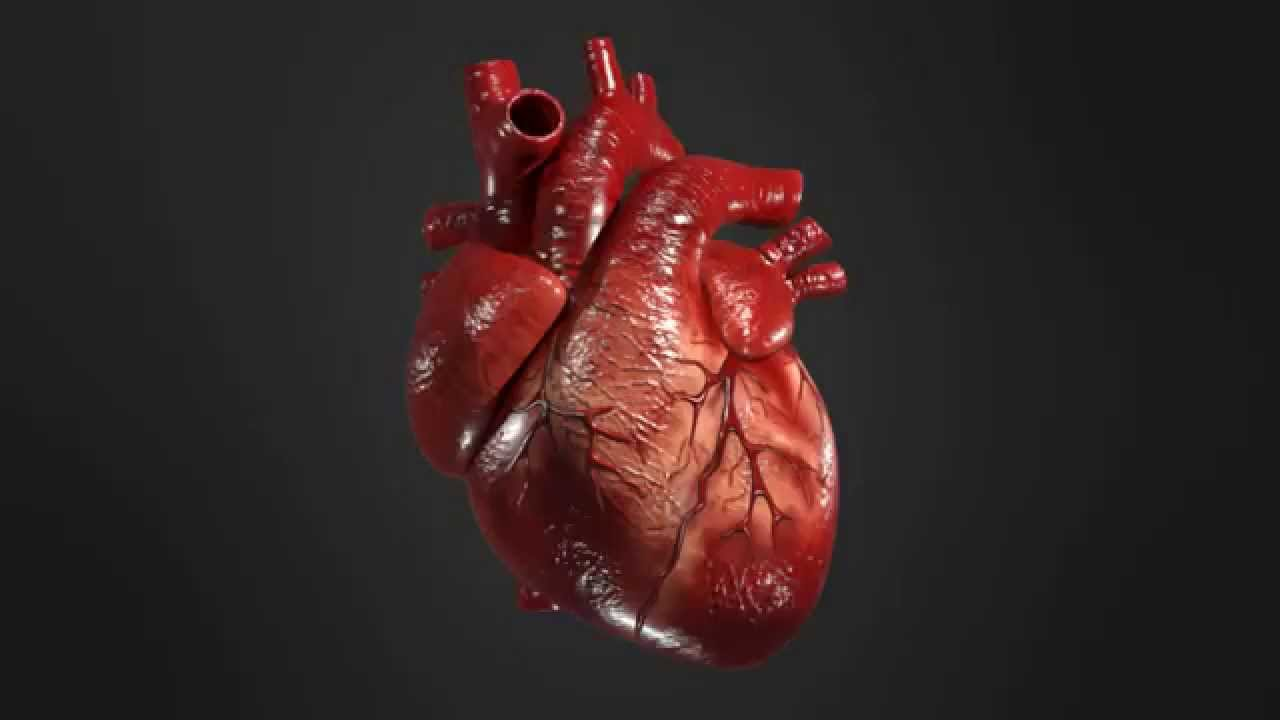human heart A human heart is an alchemical ingredient that can be used to create potions there are two versions of the human heart, which differ in weight and value, but the effects are the same.