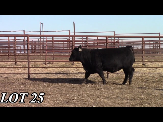 Mead Angus Farms Lot 25