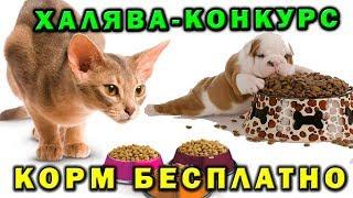 Корм в подарок для собак и кошек ♕ Конкурс ❤ Вконтакте за репост 🎤 Зоохвост