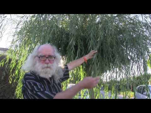 Herbs of the Sun, Moon and Planets explained by author Steve Andrews