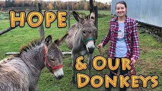 Hope And Our Donkeys | A Big Family Homestead VLOG