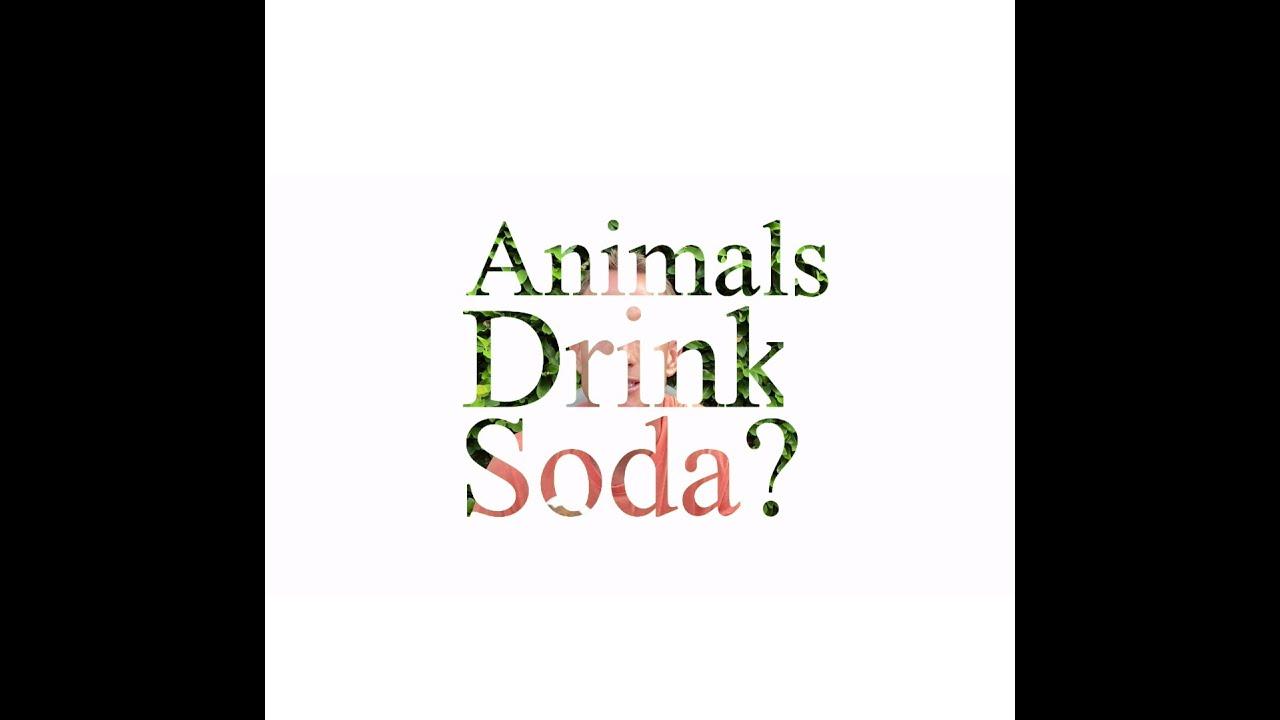 Do Animals Drink Soda?