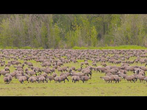 Grant's Getaways: Wetland Wanderings and Wildlife