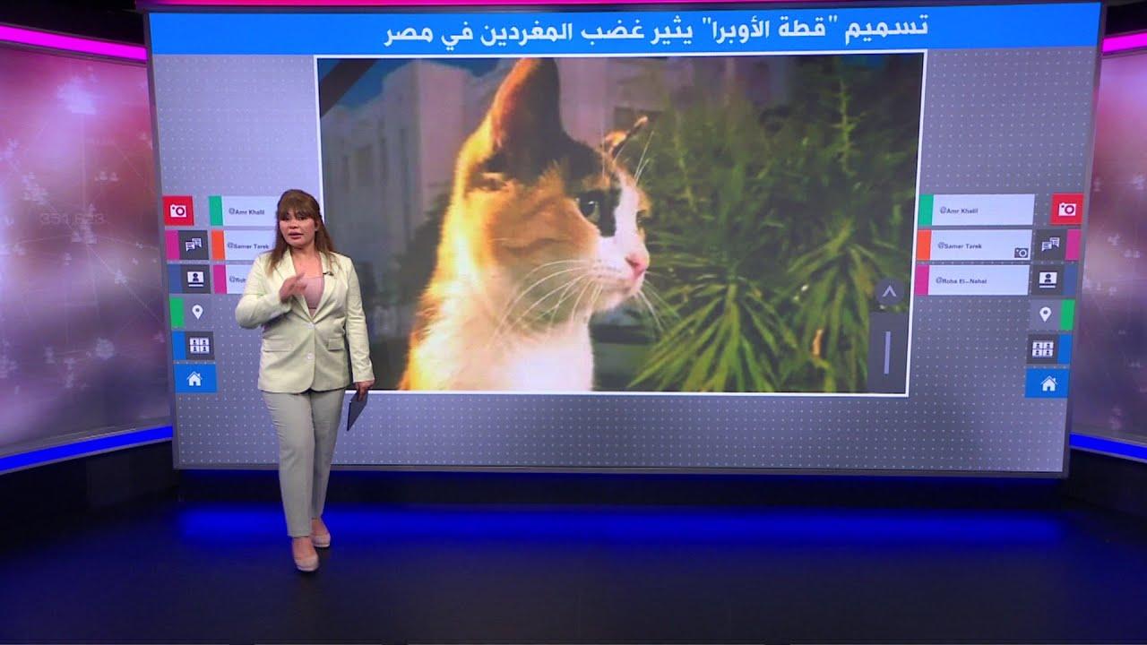 تسميم -قطة المهرجان- وأولادها يثير غضبا على وسائل التواصل في مصر  - نشر قبل 4 ساعة