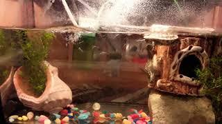 Мини-аквариум с рыбками и черепашкой. Фильтр Barbus.