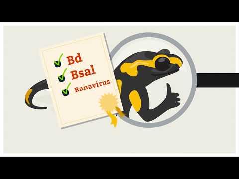 Disease-free amphibian collection