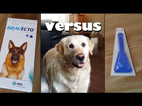 My Dog testing Bravecto Pill vs. Spot Ons, Anti Flea and Tick protection