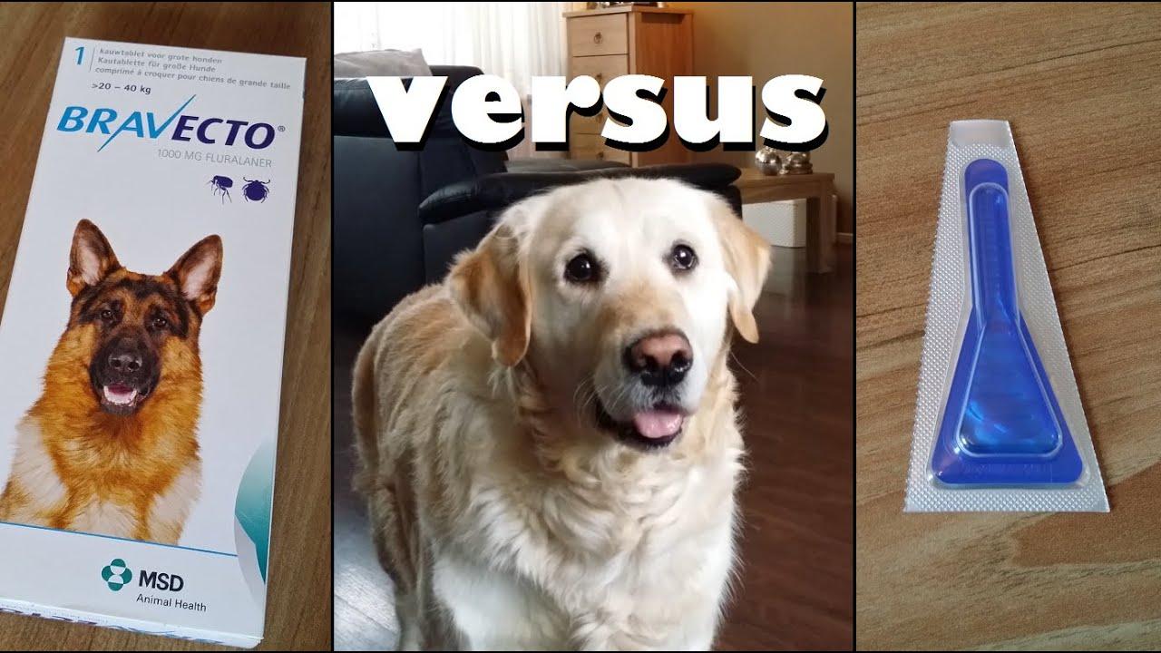 Best Flea Tick Stuff For Dogs