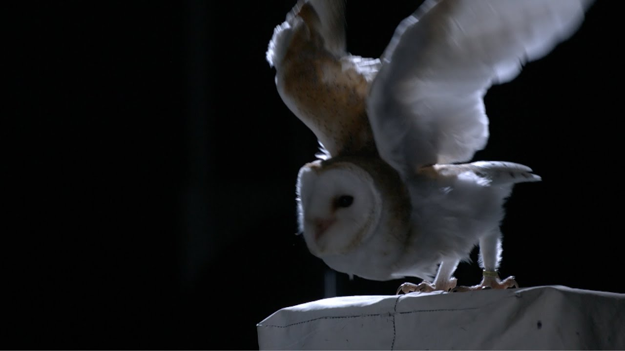 15 Mysterious Facts About Owls | Mental Floss
