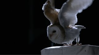 The silent flight of an owl - Natural World: Super Powered Owls Preview - BBC Two