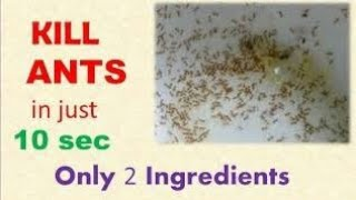 Kill ANTS in just 10 sec / Get rid of Ants without Poison/ only 2 ingredients