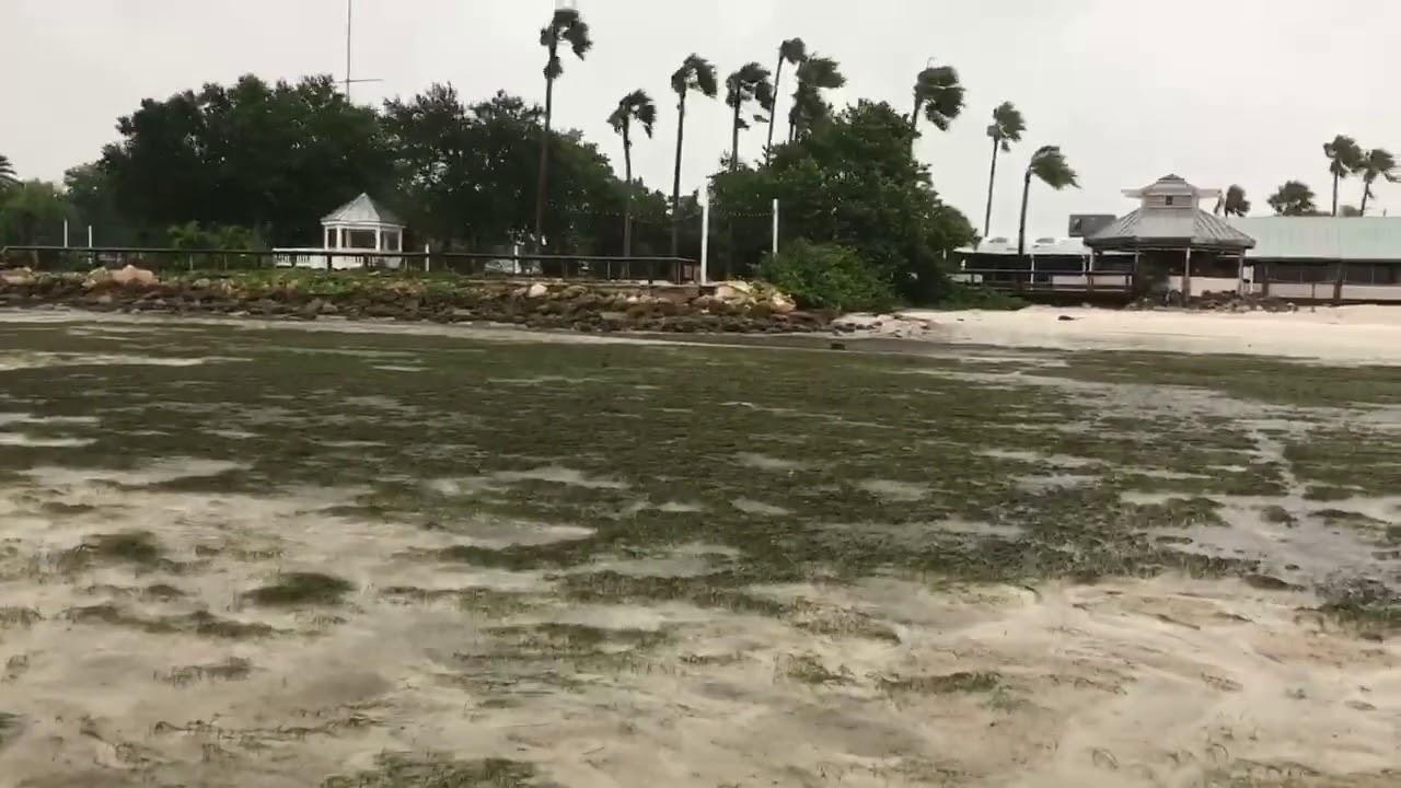 Irma Tampa