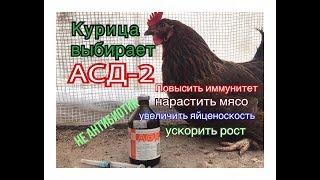 Курица выбирает АСД2 ! Сильней иммунитет. Ускоренный рост. Улучшение яйценоскости.