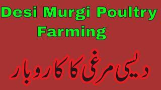 Golden Misri Hen Farming/Desi hen farming in Pakistan/Layer