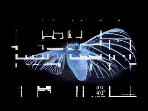 The Mothman [techno   Noise   Ritual] ~ Gen Thalz