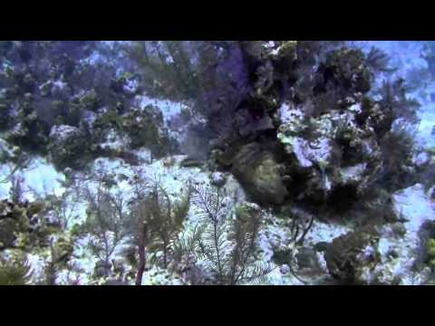 Diving Grand Turk with Dr Mark 2-9-11.flv