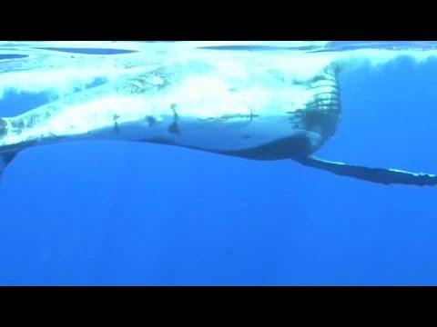 جزيرة لاريونيون الفرنسية تفكر في إنشاء شرطة خاصة لضمان راحة الحيتان الحدباء…  - نشر قبل 25 دقيقة
